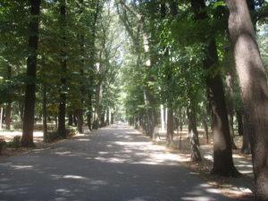 Parco-delle-Cascine-di-Firenze
