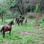 #aptmassa2012: Cammina cammina…al Monte Brugiana
