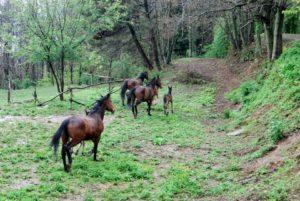 Monte-Brugiana-centro-trekking-a-cavallo